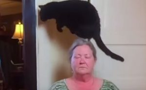 Operant conditioning explains why this cat jumps at the same spot all the time