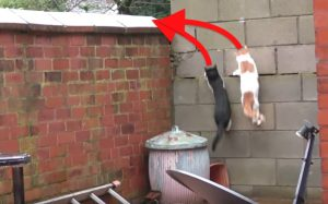 Cats jump in sync