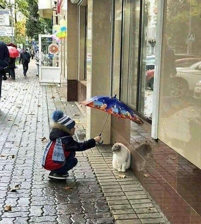 Child protects street cat from rain