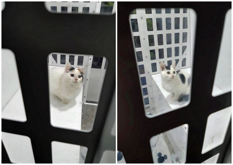 Two cats rescued by police because they were unfed for at least 24 hours