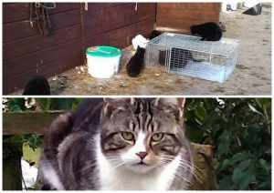 Feral cats on farms in the UK
