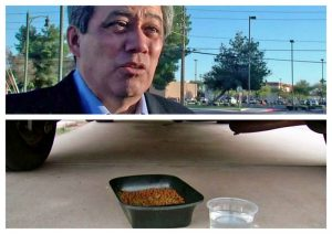 Paul Rodriguez loves to feed fera cats but he falls foul of the law