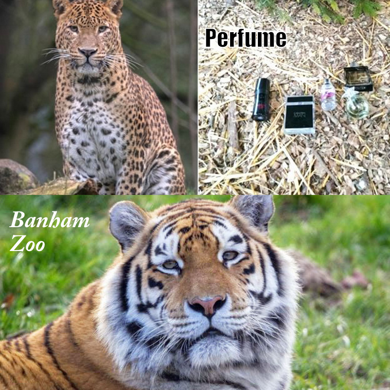 Is perfume safe to use to stimulate big cats at zoos?