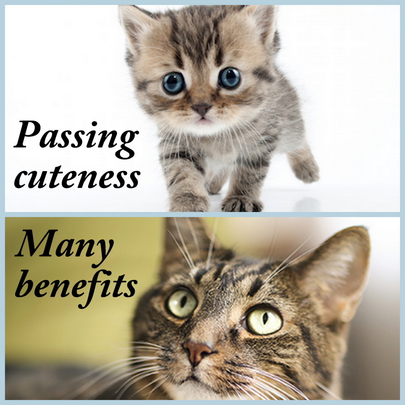 Benefits of older cats