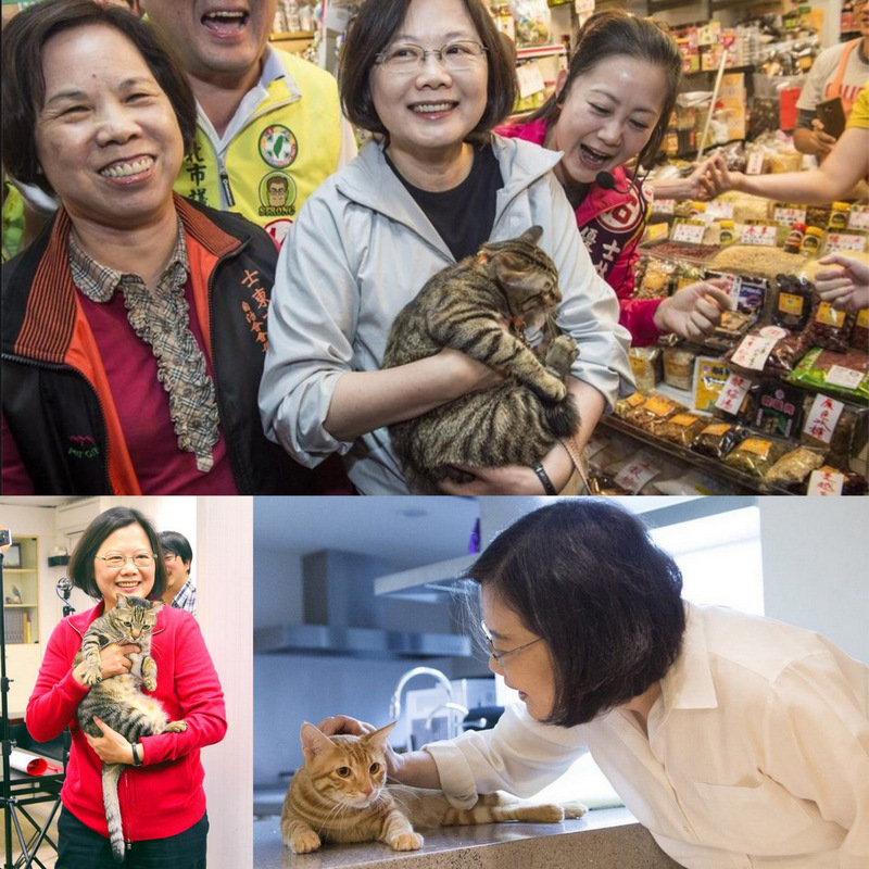 President Tsai Ing-wen is a cat lover and a strong and intelligent woman