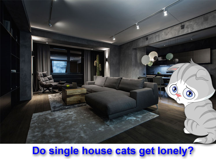 Do single house cats get lonely?