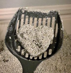 Heart-shaped poop from cat litter tray that tells you that your cat loves you