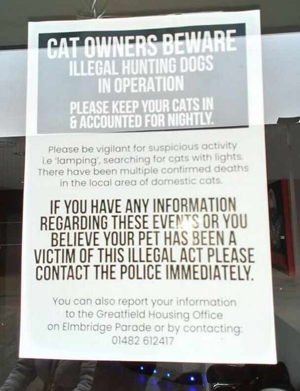 Hunting dogs allegedly killing cats