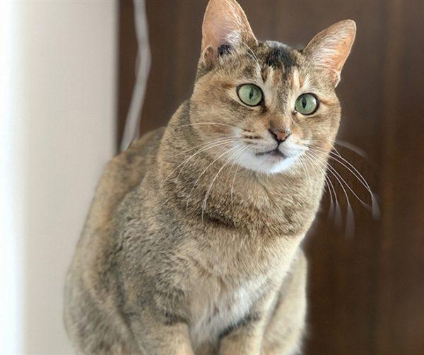 Stray cat from China