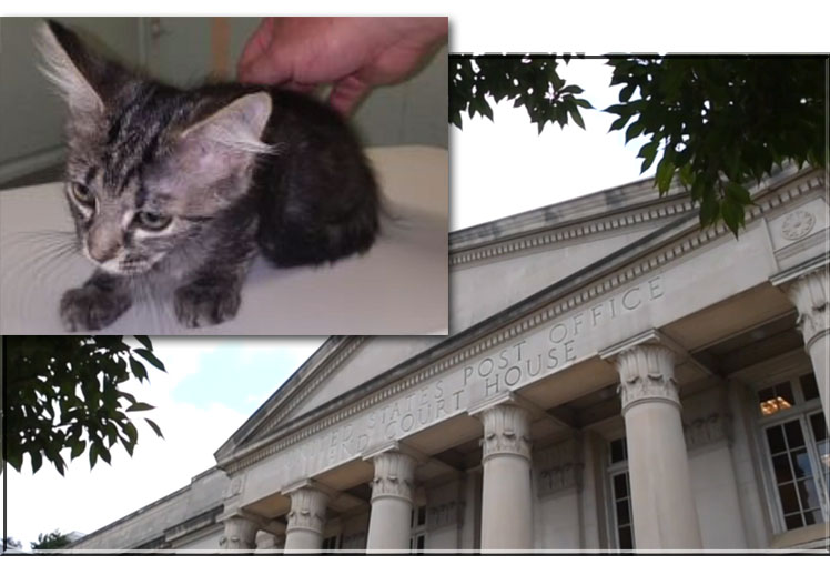 Man sues in cats' names in federal court for compensation