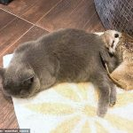 Unusual meerkat and cat friendship