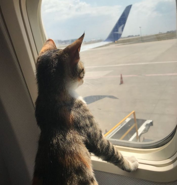Cat on plane out of carrier
