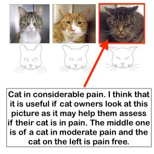 Cat suffering from pain