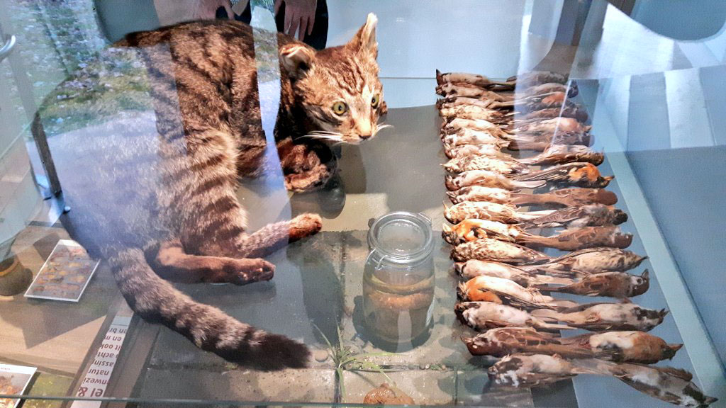 Picture of stuffed cat and dead prey