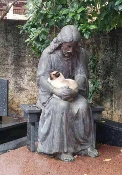 Ragdoll cat finds Jesus