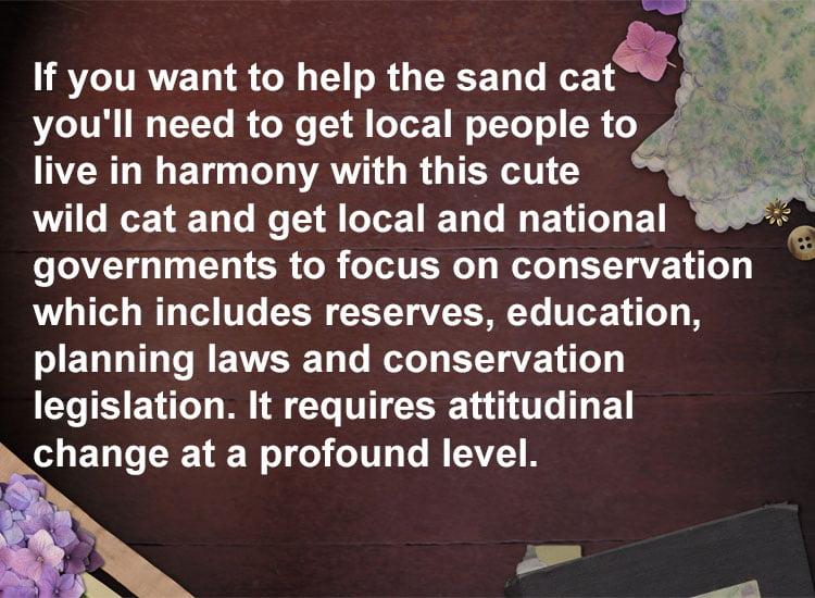 Sand cat conservation