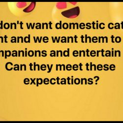Can domestic cats meet our expectations?