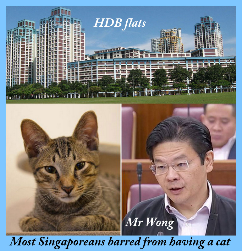 Sinaporeans barred from having cats