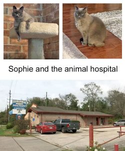 Sophie and the animal hospital concerned