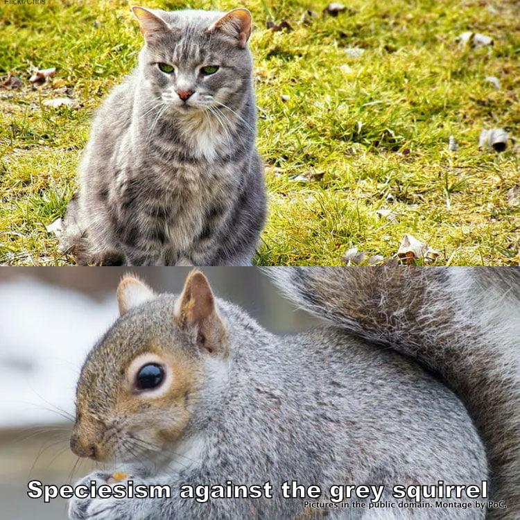 Speciesism against the grey squirrel