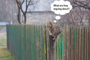 The difficulties in proving cat theft between neighbours