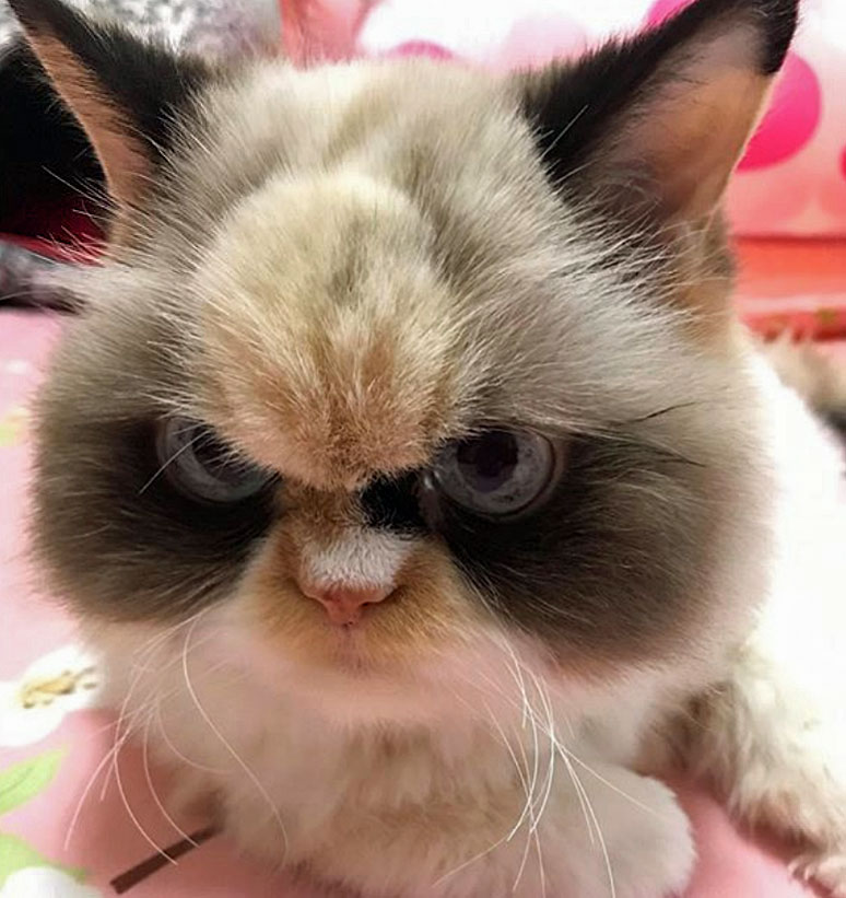The New Grumpy Cat - Meow Meow