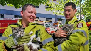 Two Aussie firefighters and two tabby cats