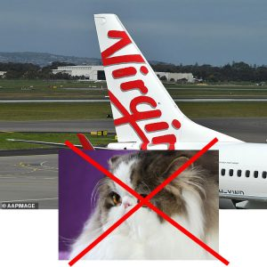 Virgin Australia bans flat faced Persians