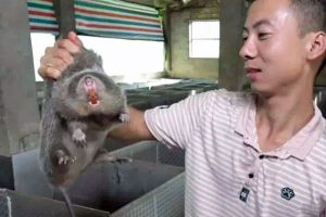 Grave situation of coronavirus infection is karma for China's abuse of animals at Wuhan live animal market