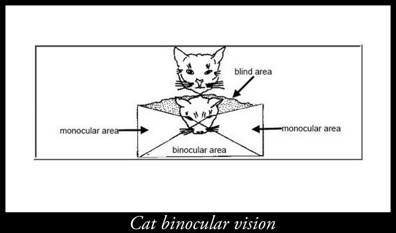 Cat binocular vision
