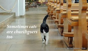 Cat in church