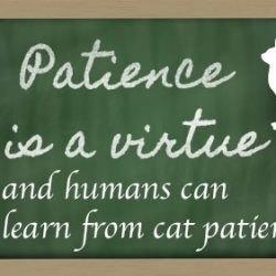 Cat patience