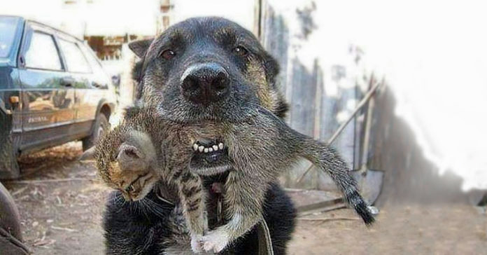 Dog with kitten in mouth