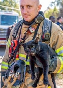Picture of quizzical firefigher and agitated black cat