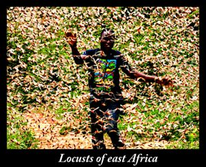 Locust swarms of biblical proportions in east Africa. I'd say it is nature's karma