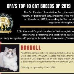 Top 10 cat breeds CFA 2019