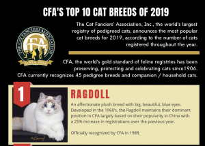 Top 10 cat breeds CFA 2019