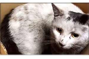 Trains went over domestic cat about 250 times and he survived