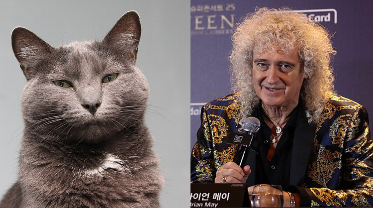 Brian May and cat