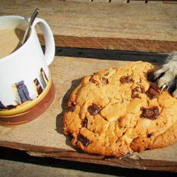 Cat grabs human food
