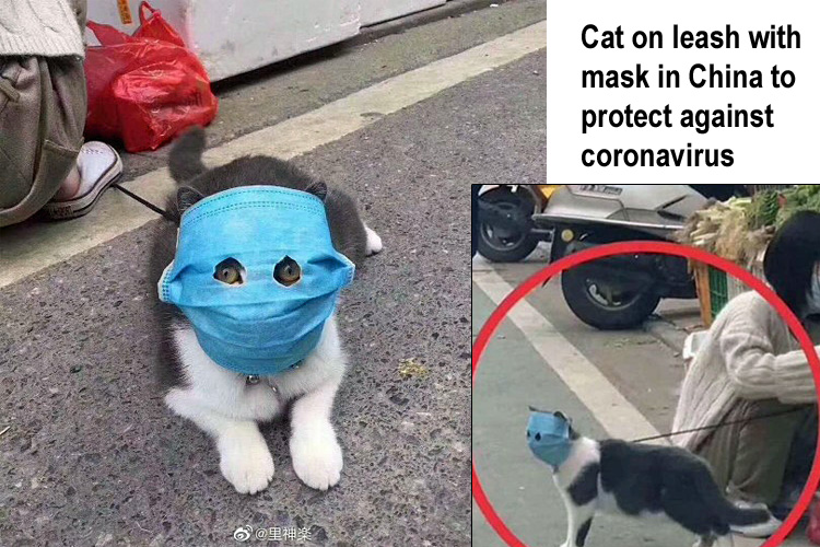 Cat on leash with mask in China to protect against coronavirus