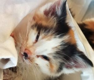 Cat rescued given a name and euthanised