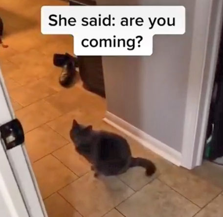 Cat says 'are you coming?'