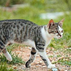 Cat wandering outside