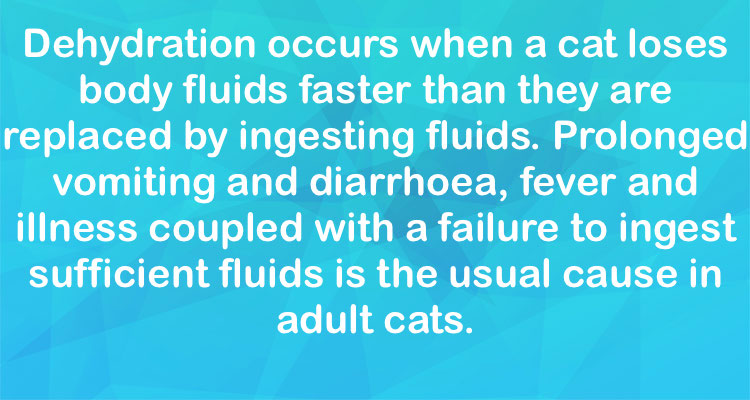 Feline dehydration