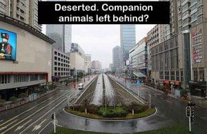 Deserted city in coronavirus panic