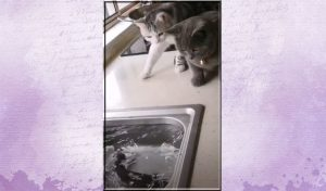 Fish terrifies 2 cats