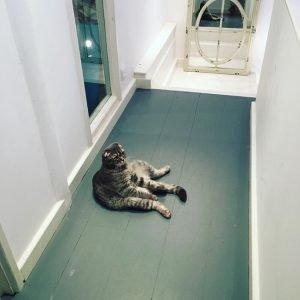 Flack's cat