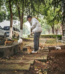 'Girl' feeds feral cat in China. Image used to illustrate the study