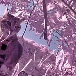 Kittycam footage
